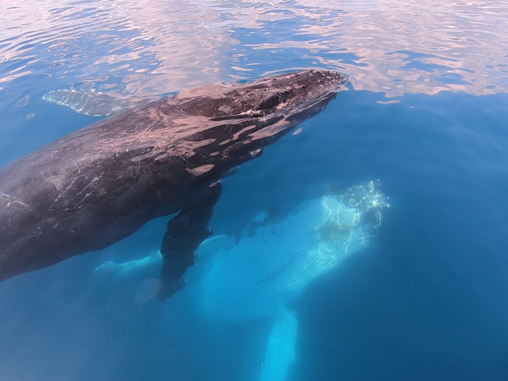 Hervey Bay Whale Watching Day Tour (from Brisbane) image