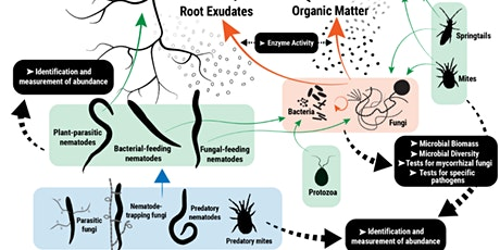 Soil Biology in Vegetable Production - 2-day Masterclass 2021 tickets