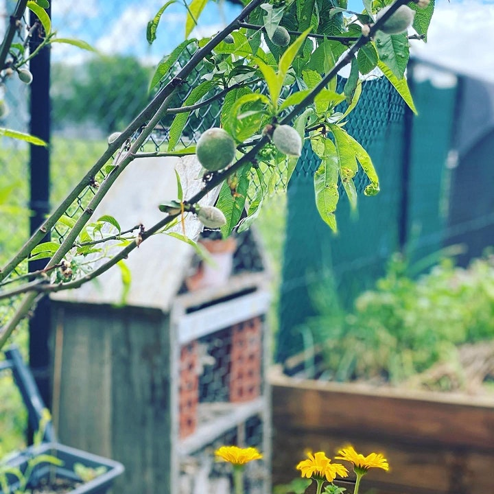 Fruit Tree Pruning Workshop with The Hidden Orchard & Food Is Free Inc. image