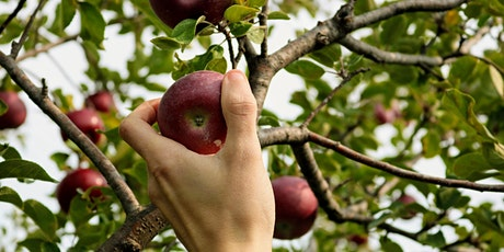 Fruit Tree Pruning Workshop with The Hidden Orchard & Food Is Free Inc. tickets