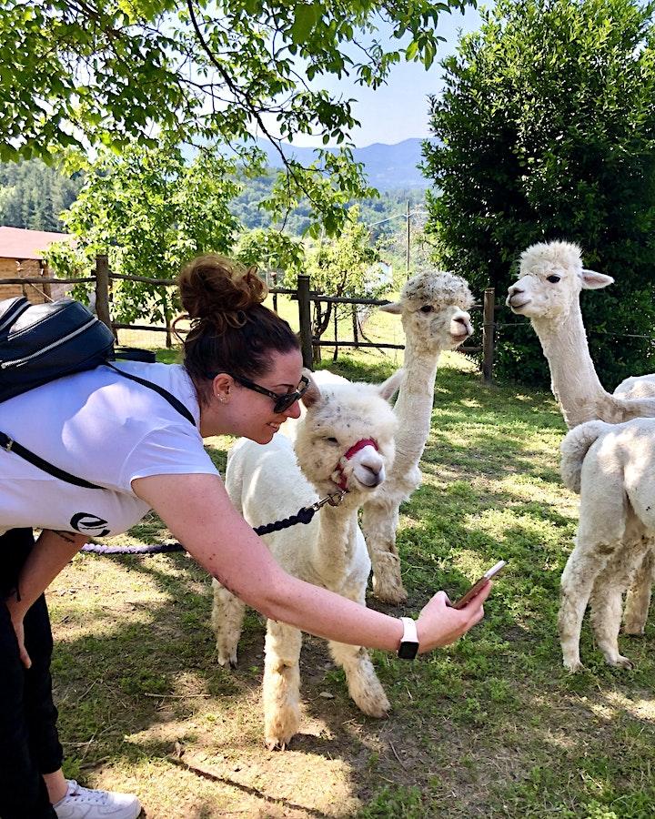 Immagine Meet My Alpaca: the Experience 25 luglio