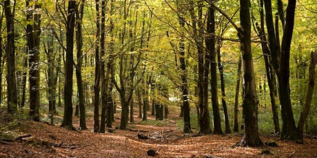 June 2021 Natural Mindfulness Walk Fforest Fawr tickets