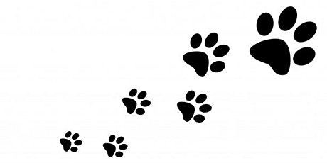 Make a Mammal Footprint Tunnel tickets