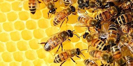 The World of  Beekeeping tickets