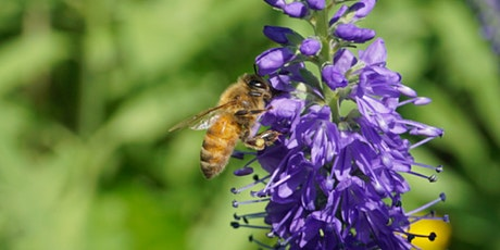 Nectar and Honey Night tickets