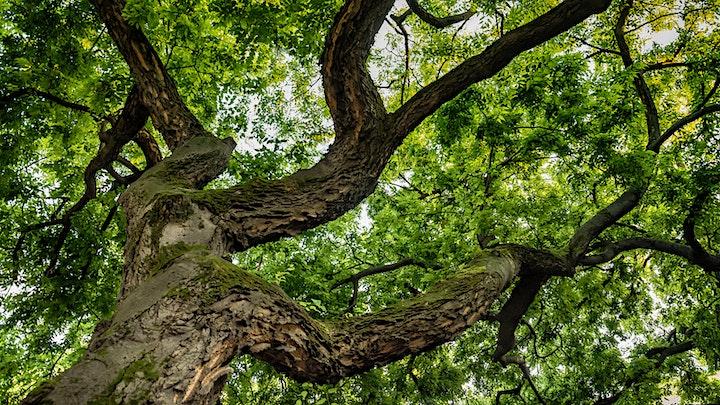 Texas Tree Identification image