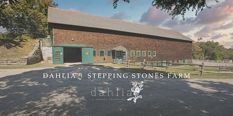 dahlia   stepping stones farm tickets
