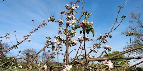 Orchard talk at Fiddler's Hill Barrow tickets