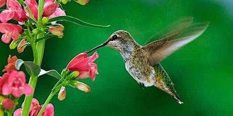 Perennials and Pollinators tickets