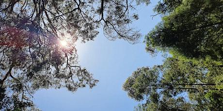 Sound Medicine Hike - Gresswell Forest tickets