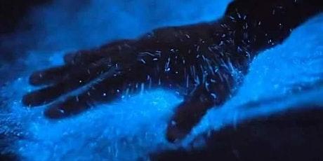 Bioluminescence Paddle tickets