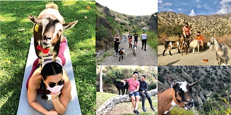 Goat Yoga Hike- SOLD OUT!! tickets