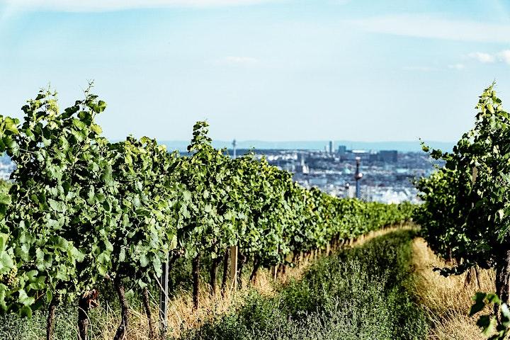 Walk and Talk Business Networking und Weinwandern image