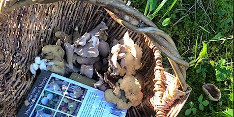 Fungi  In Your Backyard with Karel Bergmann tickets