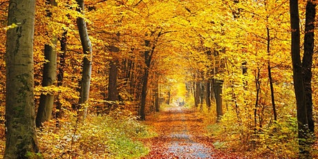 Mindful Photography Course - Autumn (Zoom) tickets