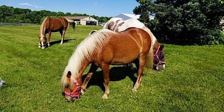 Horse Yoga Fundraiser tickets