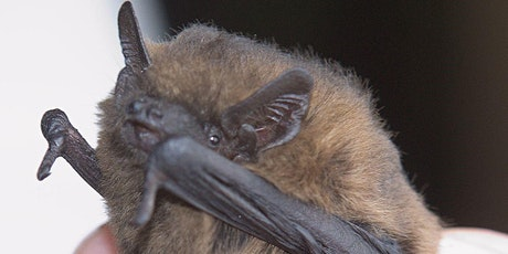 Workshop for Adults: Discovering the Amazing World of Bats tickets
