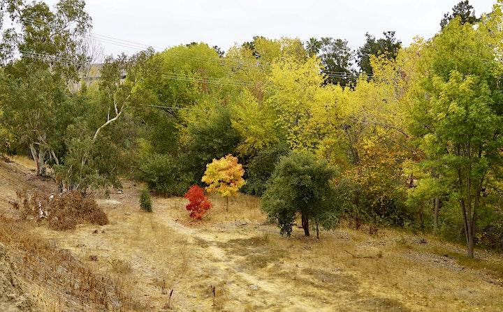 BioBlitz on Los Gatos Creek at Creekside image