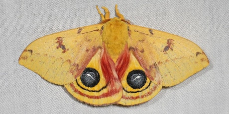 Celebrate National Moth Week! Workshop and Survey with Judy Gallagher tickets