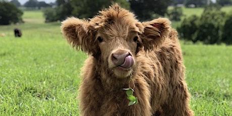 FARM KIDS SCHOOL HOLIDAYS - Cows Workshop tickets