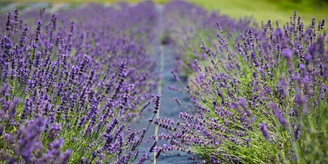 Secrets From a Lavender Grower tickets