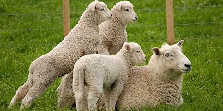 Lamb Marking Best Practice tickets