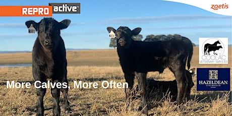 ReproActive Hazeldean - More Calves, More Often tickets
