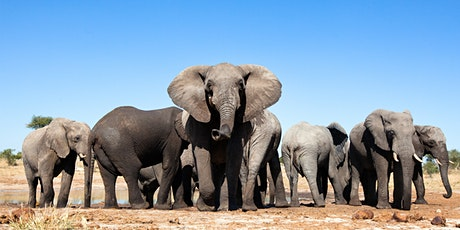 Mammals, Our Big Stories: Elephants | Edinburgh Science tickets