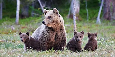 Mammals, Our Big Stories: Bears | Edinburgh Science tickets