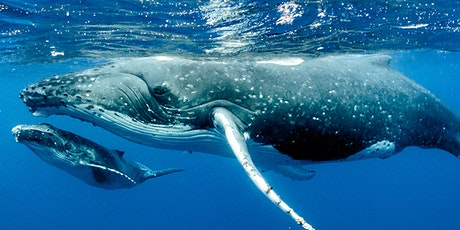Mammals, Our Big Stories: Whales | Edinburgh Science tickets