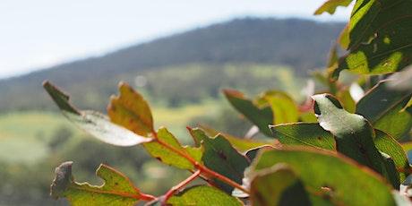 Hills Biodiversity - Planting at Vinteloper tickets