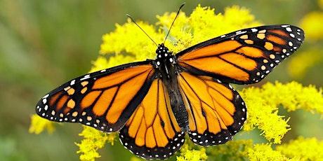 Butterfly Class - New Parents Meeting tickets