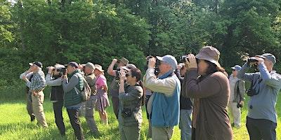 Small Group Birding: Wed June 23, 7:30 am Marshlands Conservancy