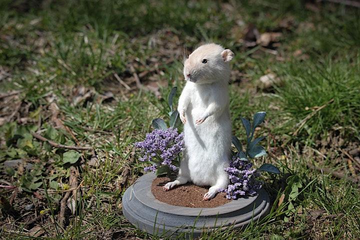 Rat Taxidermy Class image