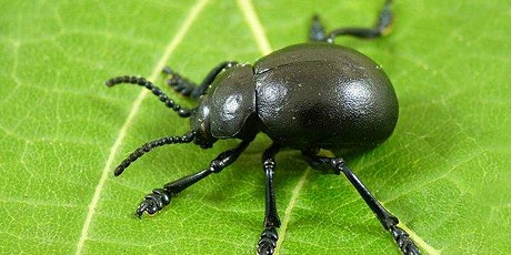 Beetle Class - New Parents Meeting tickets