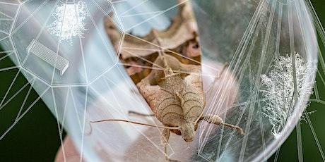 Moth Kota - Illumination tickets