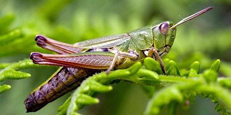 Grasshopper Class - New Parents Meeting tickets