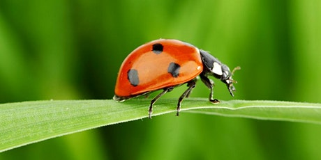 Ladybird Class - New Parents Meeting tickets