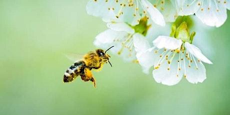 Honeybee Class - New Parents Meeting tickets