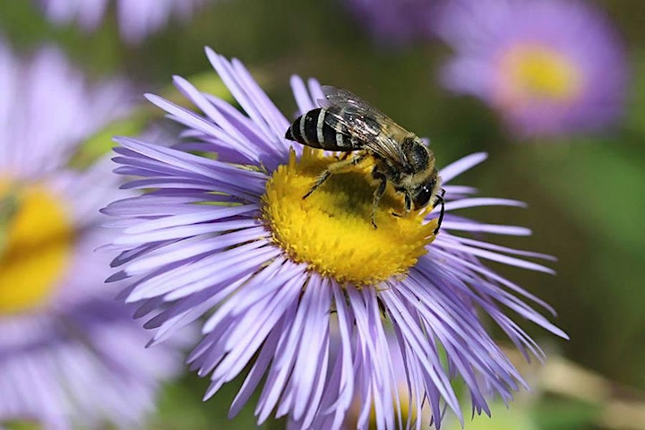 Learn about Wildflowers for Pollinators, Bees, and Beekeeping image