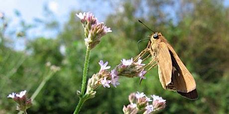 Great GA Pollinator Census & BioBlitz Webinar tickets