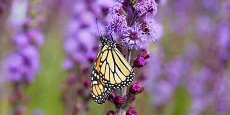 Community  Science Pollinator Count -  August 21 tickets