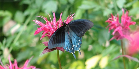 Pollinator Gardening: Make Your Yard Come Alive! tickets