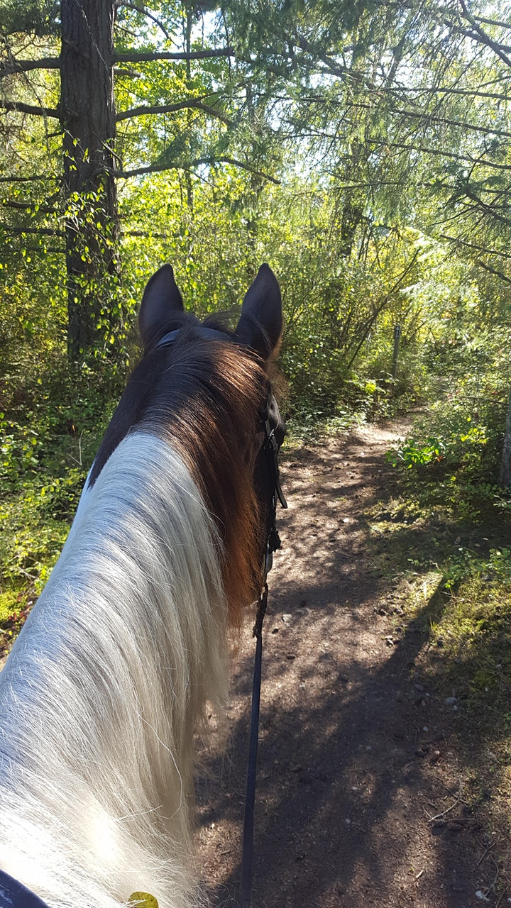 Through the Horse's Ears Trail Ride - Photo Challenge image