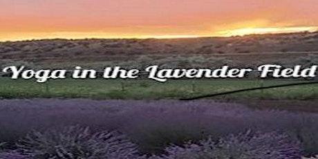 Yoga in Lavender Field tickets