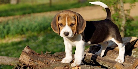 The 5 Things to Know about Working with Breeds from the Hound Group Tickets
