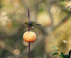 Mitre 10 MEGA Backyard Builders: Bird Feeders tickets