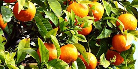 Community garden workshop series - Fruit tree pruning & maintenance tickets