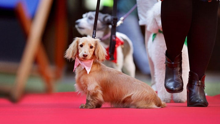 Swanky Paws Charity Book - Launch Event image