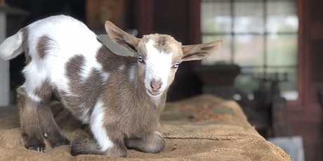 BABY GOAT YOGA + RANCH MUSEUM TOUR tickets